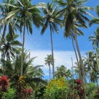 Пальмы Фиджи :: Александр Терентьев
