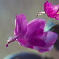 Розовые птицы :: Владимир