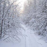 утром на лыжне :: сергей