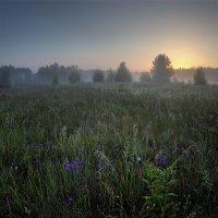 Время коротких ночей :: Александр Бархатов