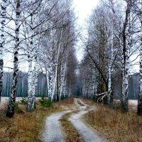 дорога в голый лес :: Александр Прокудин