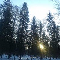 Ели и солнце :: Сапсан