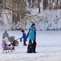 На зимней прогулке. :: Paparazzi