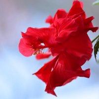 леди в красном... :: Натали Акшинцева