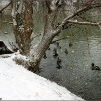 Декабрьский день на реке :: Нина Бутко