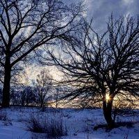 Груша на закате... :: Александр Бойко