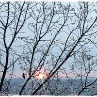 Зимним утром солнце встало.... :: Валентина ツ ღ✿ღ