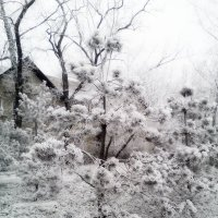 Ёжики,...снежные!) :: ЕВГЕНИЯ