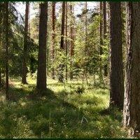 В летнем лесу :: Наталья