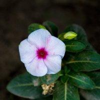 Просто цветы :: Kristina Suvorova