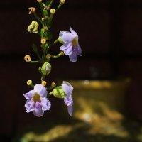 Цветок и фонтанчик :: Елена Левковская