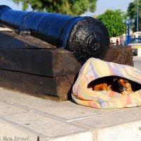 Дневальный Джеки - На боевом дежурстве .... :: Aleks Ben Israel