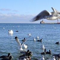 Под крылом чайки :: Виктор Шандыбин