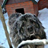 Ну здравствуй, это я! :: Михаил Столяров