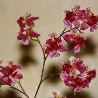 Макро  орхидея. :: Paparazzi