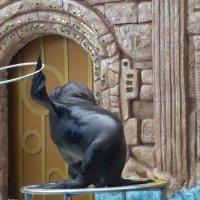 Дельфинарий в Адлере :: Наиля