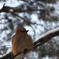 Еще неизвестная мне птаха (раза в 2-3 длиннее синицы) :: Андрей Лукьянов