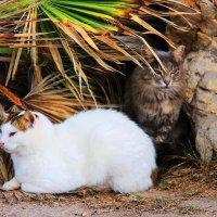 Приморские кошки :: Николай Волков