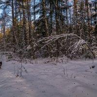 Чёрная собака на белом снегу :: Андрей Дворников