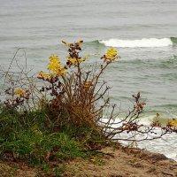 На побережье в ноябре :: Маргарита Батырева