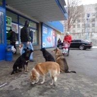 Возле входа в супермаркет... :: Алекс Аро Аро