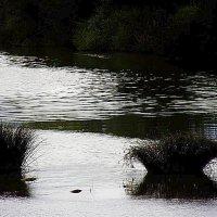 тихая вода под мостом :: Николай Семёнов