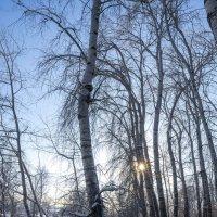 Зимняя тропинка вдоль реки Демы :: Сергей Тагиров