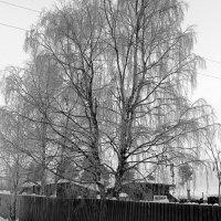 Черно-белая зима.. :: Галина Полина