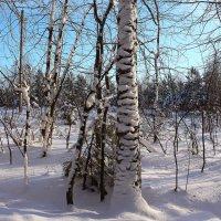 Снежные наряды :: Татьяна Ломтева