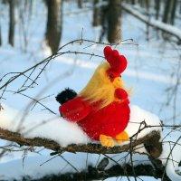 Что год Петуха нам готовит?.. :: Андрей Заломленков