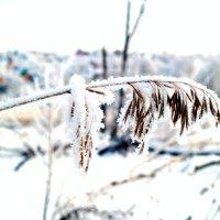 Под снежной негой... :: Андрей Заломленков