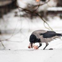 вороне где-то бог послал кусочек... :: Анна Семенова