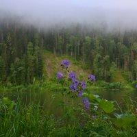 Сибирь :: Мария