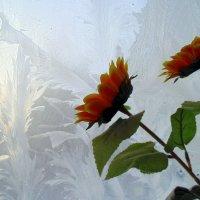 Зима и лето. :: Мила Бовкун