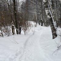 Зимний лес. :: Новиков Игорь