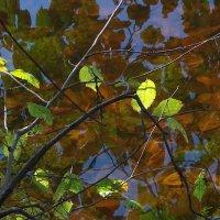 В воде прозрачной лист осенний... :: Наталья
