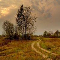 полевая осенняя дорога :: Александр Прокудин