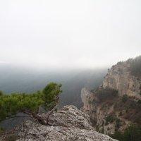 И на камнях растут деревья :: Anton Kovalchuk