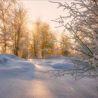 Прекрасный зимний день... :: Александр Никитинский