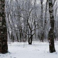 Черно-белый декабрь :: Милешкин Владимир Алексеевич