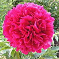 и вот сам цветок :: Надежда