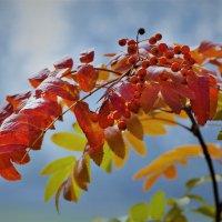 Осенний этюд :: Валерий Талашов