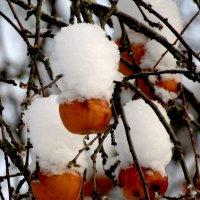 Яблоки в снегу :: Виталий Бененко