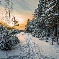Лыжня зовёт! :: Андрей Поляков