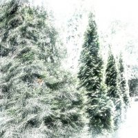Полюс холода - Сибирь :: Нина