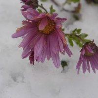 цветок на снегу :: Марина