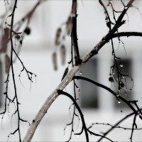 Такая зима. :: Валерия  Полещикова
