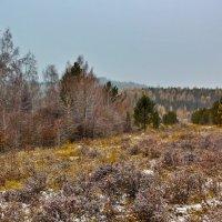 Пасмурная поздняя осень :: Анатолий Иргл