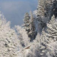 Начало декабря....Морозы. :: MaOla ***