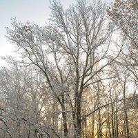 Зимний лес :: Сергей Тагиров